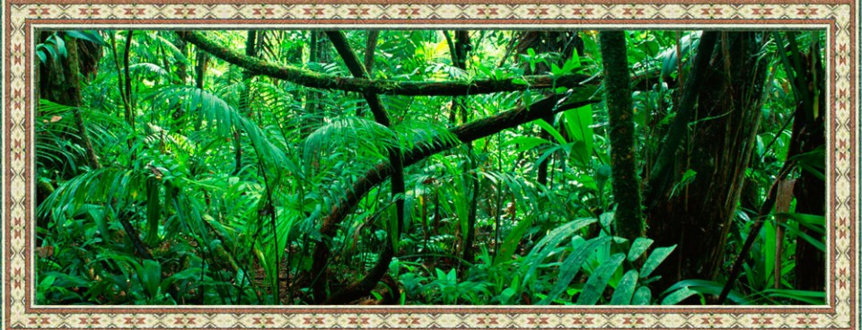 Ayahuasca and Amazonian Shamanism